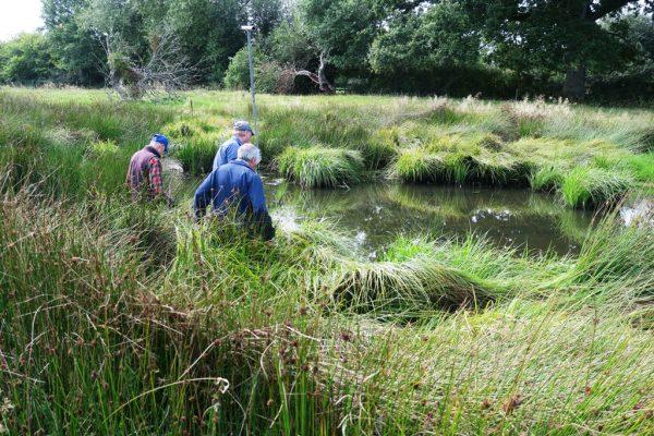 Lush vegetation at pond at Norton Canon
