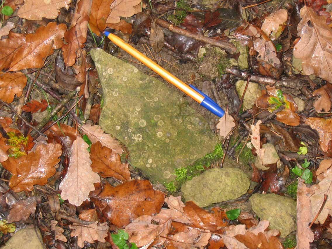 Piece of Much Wenlock Limestone